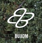 BUXOM BARS LOGO / HOFFMAN BIKES