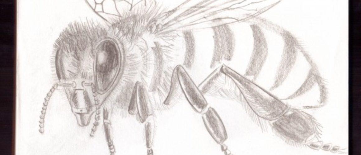 Bee01